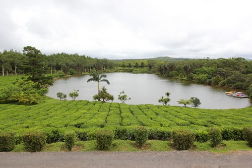 1-Bois_cheri-usine-tea-factory-Mauritius-ile_maurice-Le_saint_aubin-degustation-4