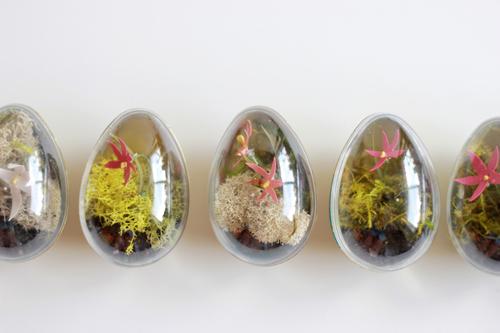 egg-carton-oeuf--easter-egg-terrarium-DIY-Ostern-Paques-Pascua-2