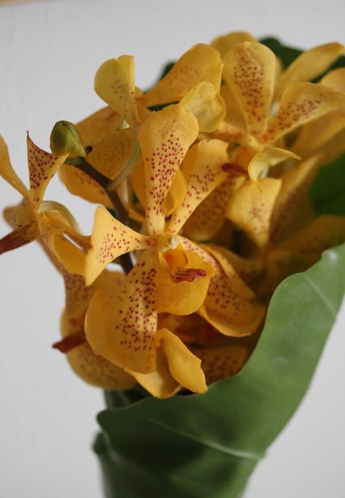 Chatrium_Riverside_Hotel-Bangkok-Thailand-orchid