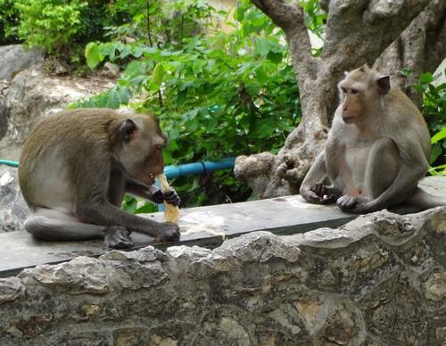 Phra_Nakhon_khiri-Khao_Wang-Historical_Park-Monkey-Thailand-blogtrip-2