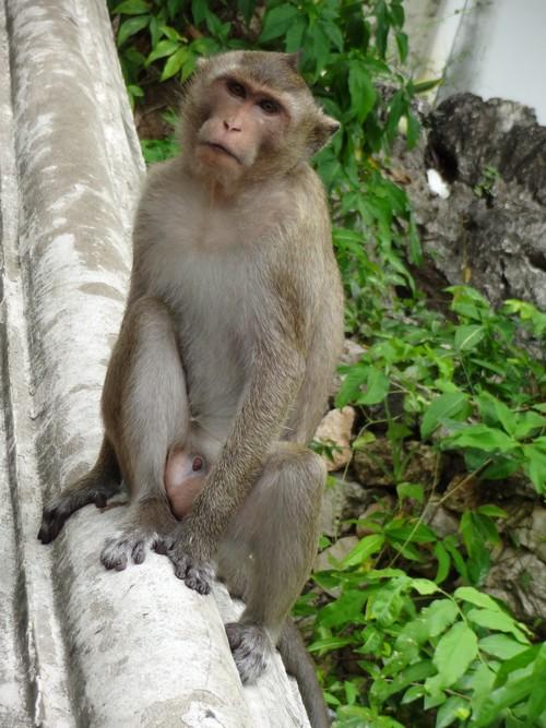 Phra_Nakhon_khiri-Khao_Wang-Historical_Park-Monkey-Thailand-blogtrip