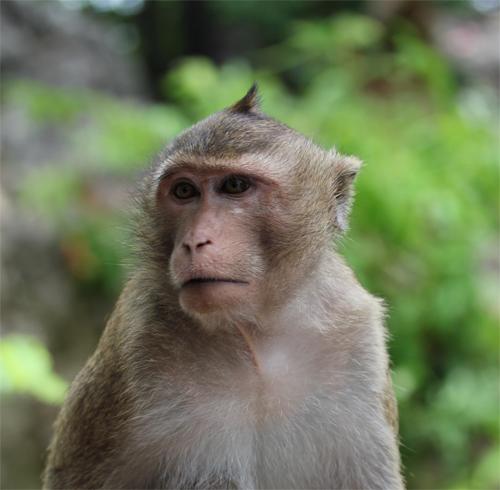 Phra_Nakhon_khiri-Khao_Wang-Historical_Park-Thailand-blogtrip-Monkey-singe-4