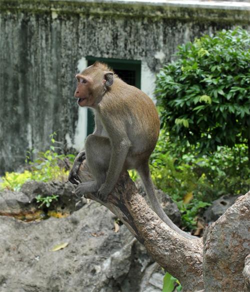Phra_Nakhon_khiri-Khao_Wang-Historical_Park-Thailand-blogtrip-Monkey-singe-6
