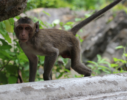 Phra_Nakhon_khiri-Khao_Wang-Historical_Park-Thailand-blogtrip-Monkey-singe