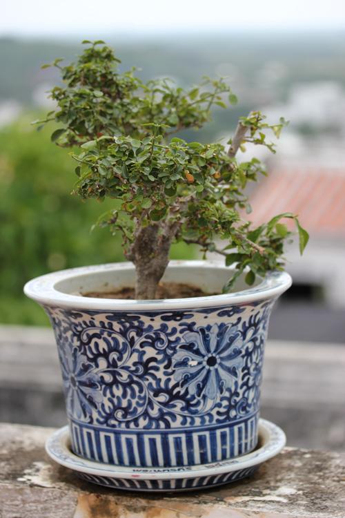 Phra_Nakhon_khiri-Khao_Wang-Historical_Park-Thailand-blogtrip-bonsai