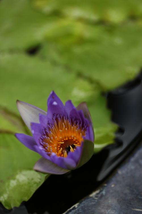 Phra_Nakhon_khiri-Khao_Wang-Historical_Park-Thailand-blogtrip-details-nenuphar-lotus