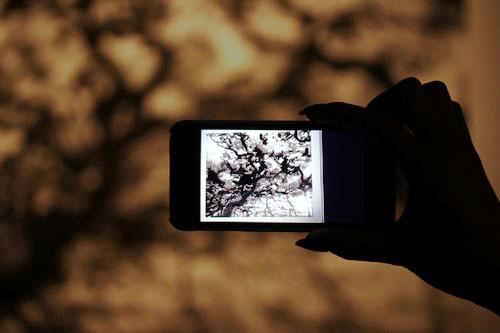 Maison_Et_Objet-Nature_made-Francois_Bernard-design-tendance-Amana-Arart-Communication_visuelle-CGI_Art-art_numerique-3