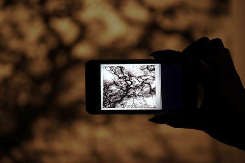 Maison_Et_Objet-Nature_made-Francois_Bernard-design-tendance-Amana-Arart-Communication_visuelle-CGI_Art-art_numerique-2