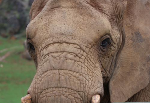 Cabarceno_Natural_Park-Animals-Nature-Leisure-Cantabrie-Spain-Elephant-3
