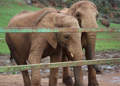 Cabarceno_Natural_Park-Animals-Nature-Leisure-Cantabrie-Spain-Elephant-5
