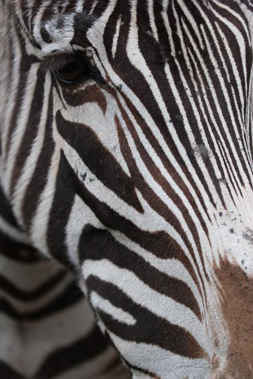 Cabarceno_Natural_Park-Animals-Nature-Leisure-Cantabrie-Spain-Elephant-blogtrip-Zebre-2
