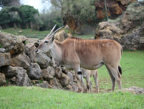 Cabarceno_Natural_Park-Animals-Nature-Leisure-Cantabrie-Spain-Gnou