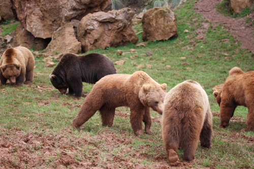 Cabarceno_Natural_Park-Animals-Nature-Leisure-Cantabrie-Spain-Ours-4