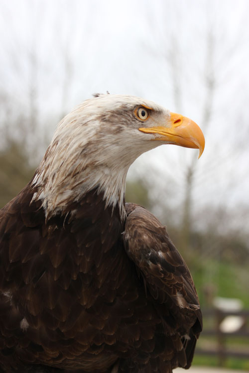 Cabarceno_Natural_Park-Animals-Nature-Leisure-Cantabrie-Spain-blogtrip-Aigle