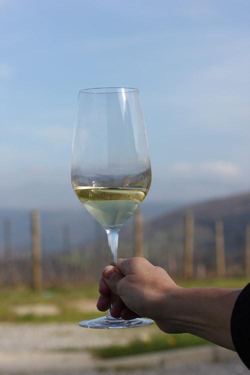 Sel_d_Aiz-Bodegas-Cantabrie-Spain-Espagne-wine-vin-Blogtrip-vignes-degustation-3