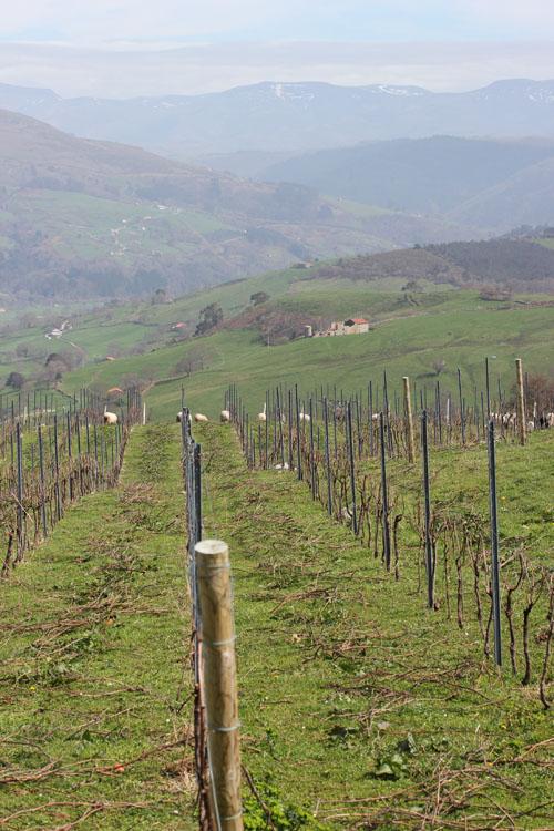 Sel_d_Aiz-Bodegas-Cantabrie-Spain-Espagne-wine-vin-Blogtrip-vignes-3