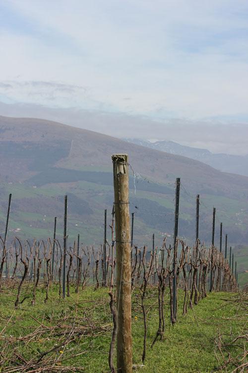 Sel_d_Aiz-Bodegas-Cantabrie-Spain-Espagne-wine-vin-Blogtrip-vignes