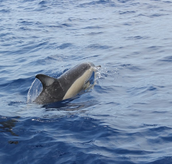 Madere-Madeira-Dauphins-Funchal-Portugal-Blogtrip-travels-1