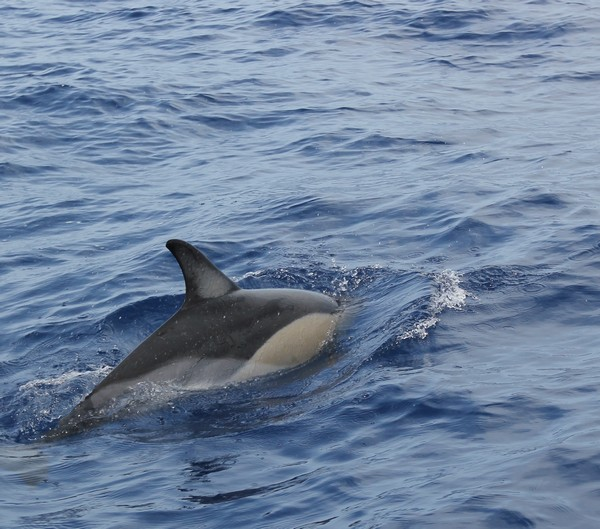 Madere-Madeira-Dauphins-Funchal-Portugal-Blogtrip-travels-2