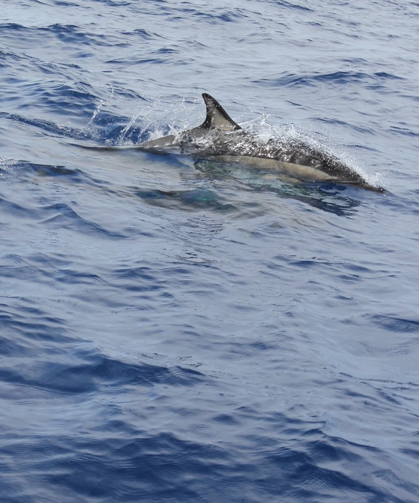 Madere-Madeira-Dauphins-Funchal-Portugal-Blogtrip-travels-4