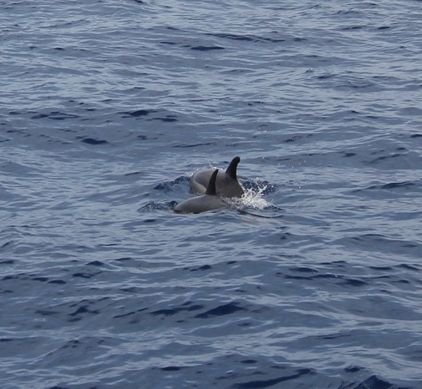 Madere-Madeira-Dauphins-Funchal-Portugal-Blogtrip-travels